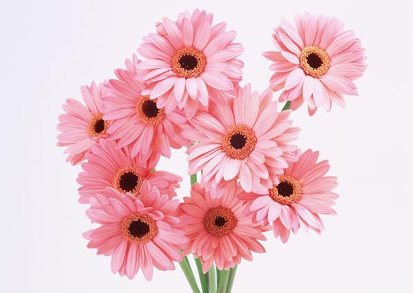 お誕生日にメッセージを花言葉で添えて♪7種の素敵な花