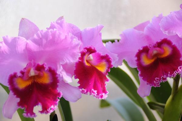 彼女の誕生日に素敵なサプライズを♪7つの絶対喜ばれる花