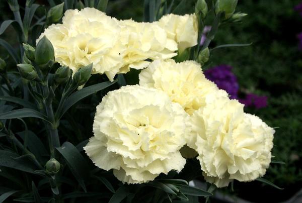 献花を失礼なく行うために!キリスト教葬儀のマナーと常識