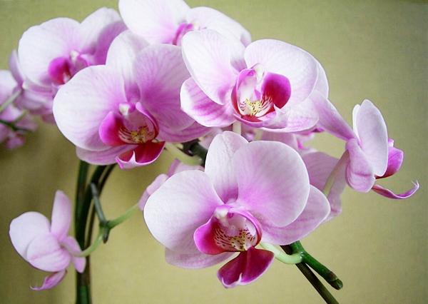 蘭の花言葉は幸福が飛んでくる!気品溢れる蘭の魅力を紹介