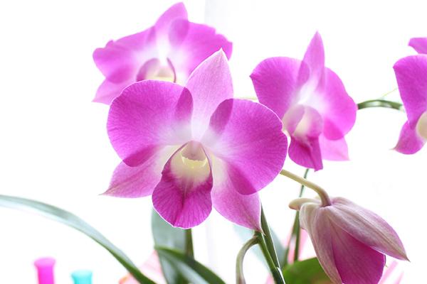 蘭の花言葉は色によっても様々♪華やかな意味7つをご紹介