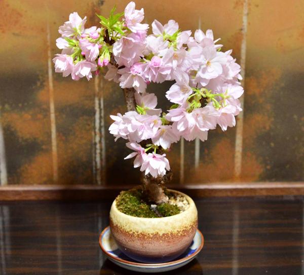 父への誕生日にプレゼントしたい植物☆贈って喜ばれる7種