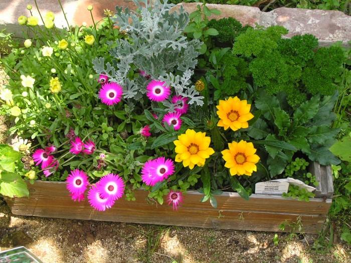 鉢植えギフトを両親に☆花言葉を添えて贈りたい7つの植物
