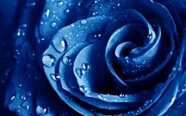 青いバラの花言葉を添えて、想いを伝える7つのアイデア
