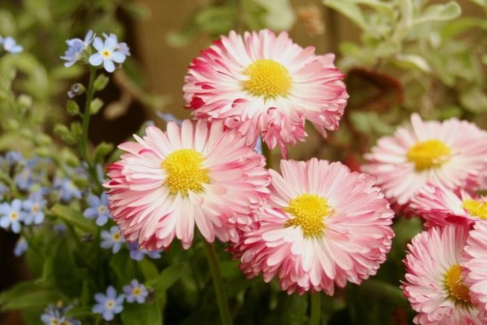 春の花で部屋を飾る☆室内にベランダに映える花々7選