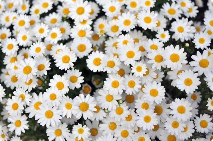春の花を誕生日に☆4月から6月生まれにおススメの7選