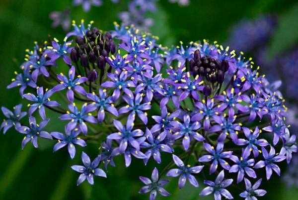 紫の花を贈る☆シーン別おススメの7つの花々と組み合わせ