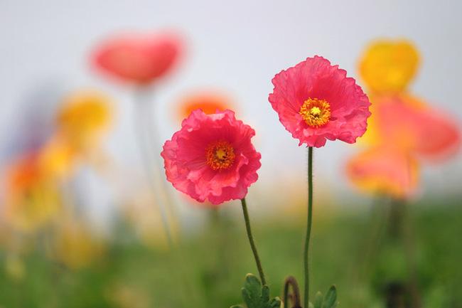 春の花で庭を彩る☆ガーデニング初心者におススメの花々