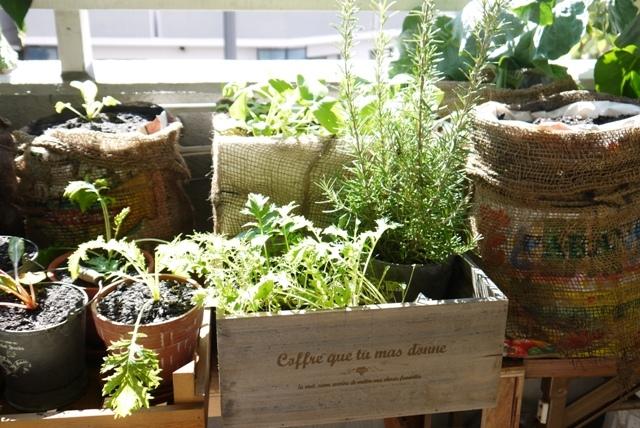 野菜の育て方☆ベランダ菜園にぴったりな7つの品種