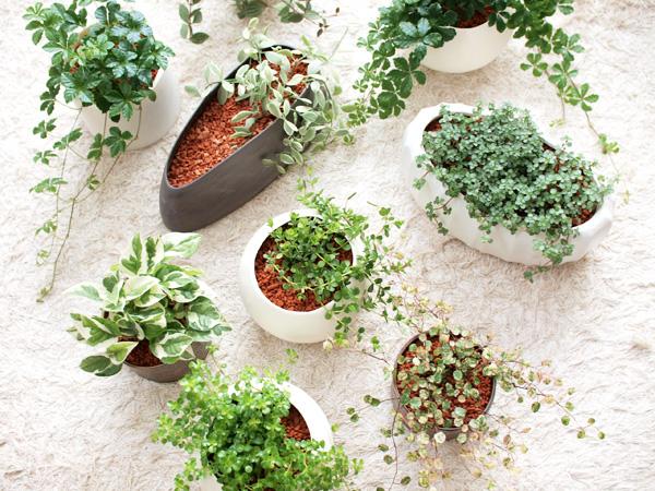 観葉植物は種類と名前で選別☆育てやすい品種をご紹介