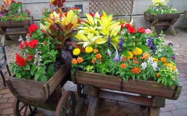 夏の花☆寄せ植えで育てやすい7つの組み合わせ