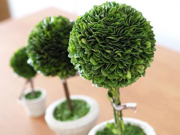 観葉植物の種類と名前☆インテリアにおススメ7品種