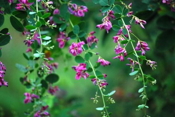 秋の花を観賞する☆万葉集で詠まれた美しき七草