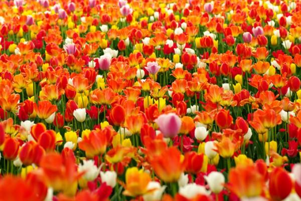 花の画像をSNSに投稿したい!スマホでも美しく撮る秘訣