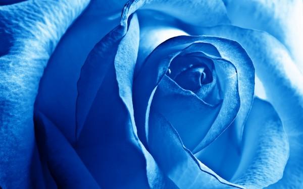 青いバラの花言葉と、花束におススメ7つの組み合わせ