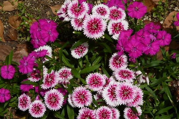花の種類と育て方!初心者でも失敗せず楽しめる7つの花々