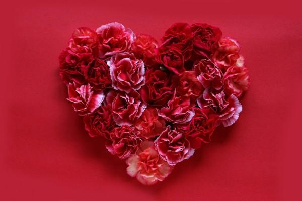 母親の誕生日プレゼントに最適!感謝の意味を持つ7種の花々