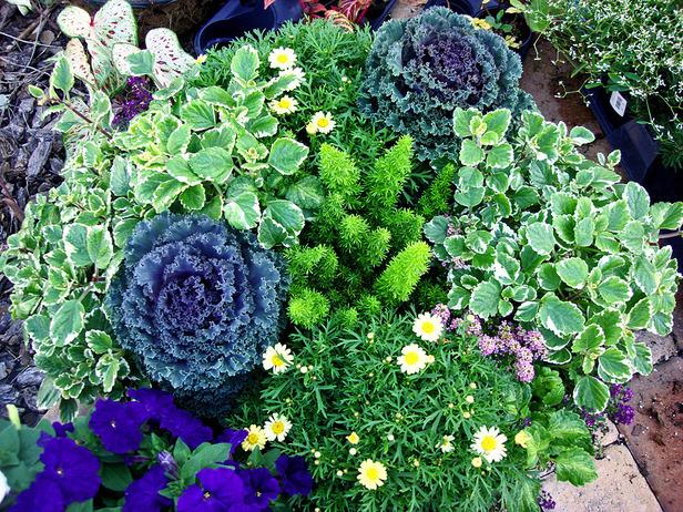 観葉植物でリラックス☆手入れが簡単7つの植物