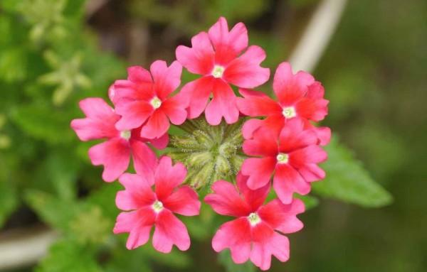 花画像をミンナに紹介☆SNSで見てもらう7つのポイント