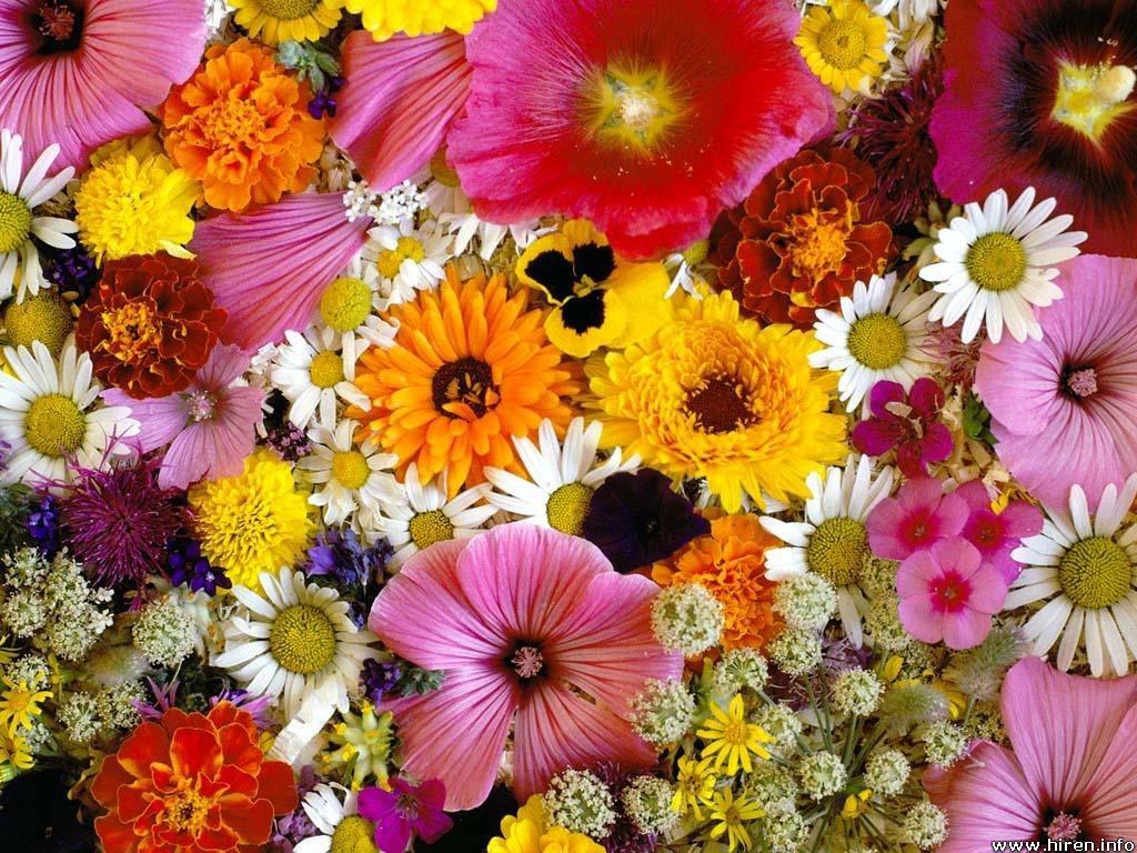 季節の花でリラックス☆室内に飾って癒す四季の花々