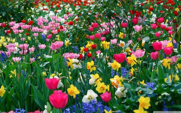 春の花を眺めて元気に☆おススメの花々とお手入れ法