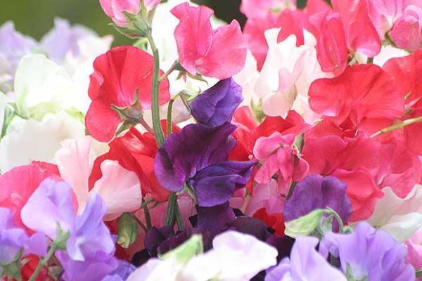 花言葉で祝福を贈る☆7つのシーンでおススメの花々
