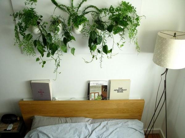 観葉植物のインテリア✩生活スタイルに合わせて選ぶコツ