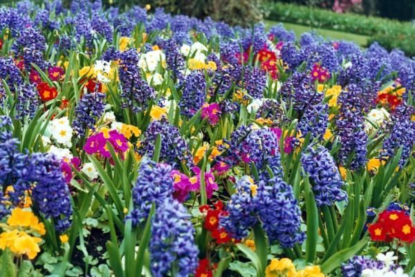 花図鑑、春に咲く9つの花と、その花言葉