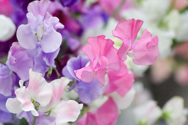 5月花とは☆種類や特徴、花言葉など情報まとめ