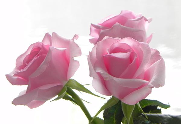 母親への誕生日プレゼント☆ブーケにして贈りたい7つの花