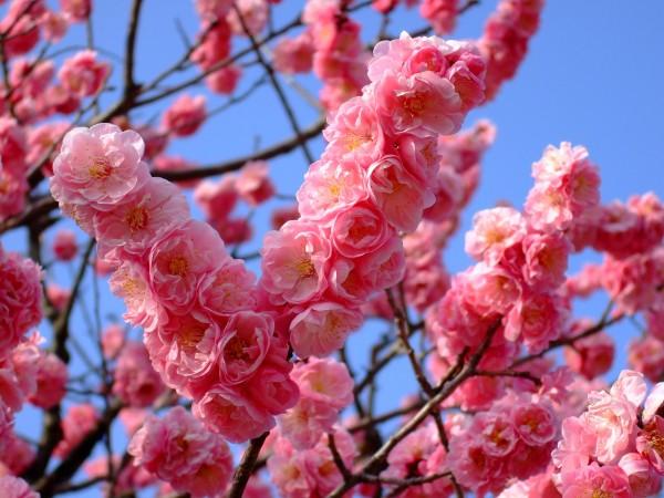 花の名前が知りたい☆花束にしたい花々春夏秋冬