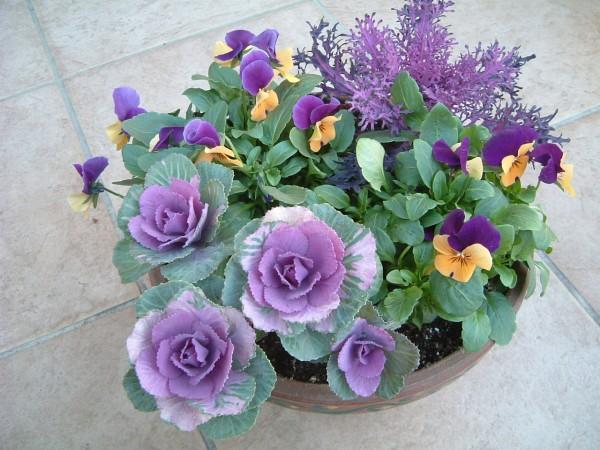 冬の花寄せ植え☆寒い季節を盛り上げる組み合わせ