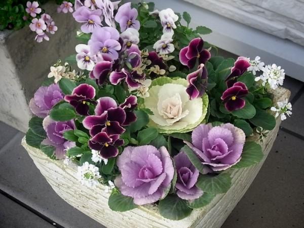 冬の花ガーデニング☆初めてさんが育てる7つの花々