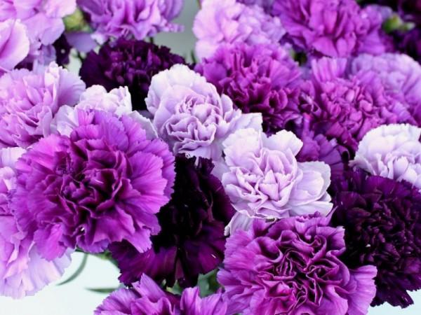 紫の花を贈る時☆古希に退職祝いにおすすめ7つの花々