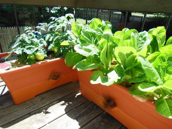 ベランダガーデニングで菜園!おすすめ野菜と育て方