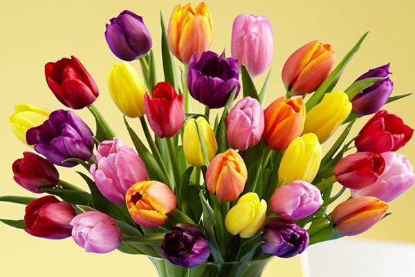 【チューリップの花言葉】プレゼントする時に注意すべき点
