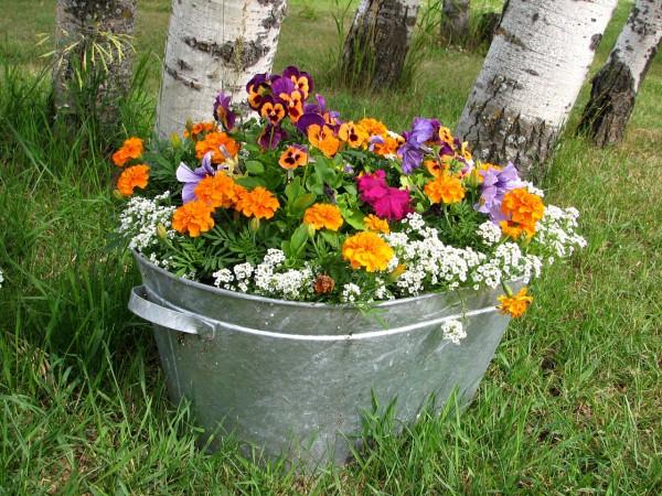 寄せ植えにトライ!初めてさんにおすすめの花々