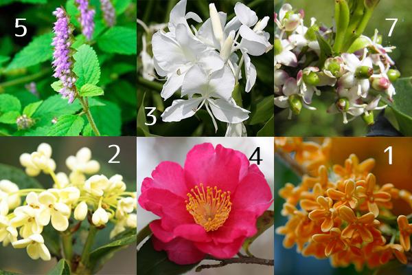 秋の花の香りでリッチに☆女性の魅力アップ7つの花々