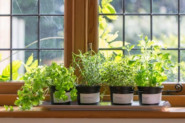 ハーブの育て方☆初めてさんにおすすめの7つの植物