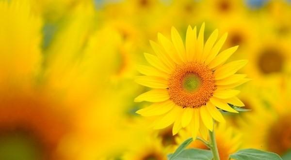 夏に咲く花とアロマ☆夏バテを気遣う7つのギフト