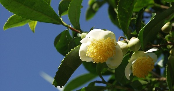 秋の花とアロマ☆心寂しい季節に贈る香りと花々