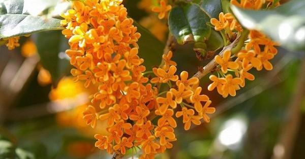 秋の花で心も落ち着く☆五感で癒す7つのアイデア