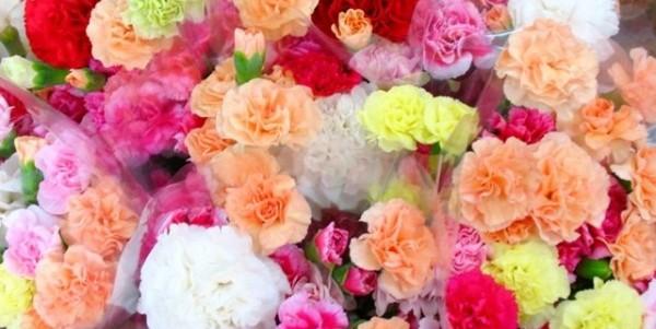 カーネーションの花言葉☆母の日に贈る7つの理由