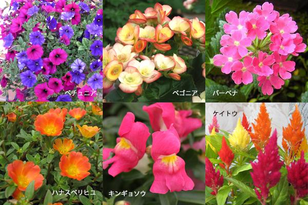 夏の花から始めるガーデニング☆育てやすい植物たち