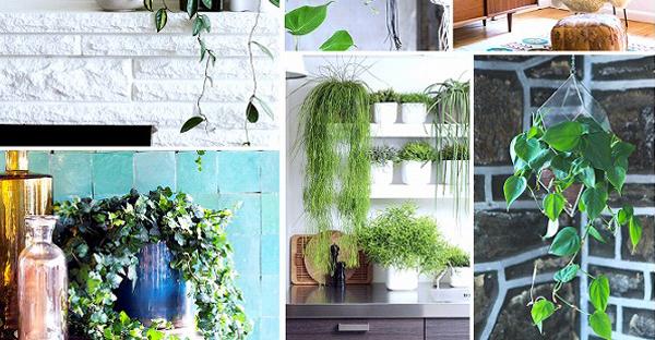 玄関の観葉植物で風水効果☆緑で福を呼ぶおすすめ植物