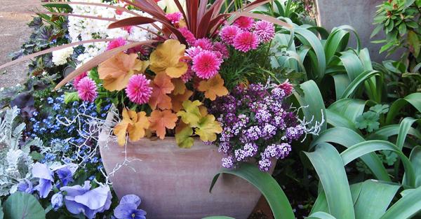 秋に花を植えて楽しむ☆育てやすい秋冬に咲く花々