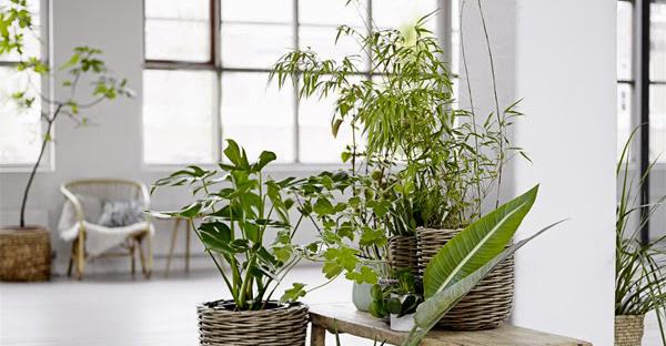玄関に観葉植物を置いて開運!運を呼び込む7つの植物