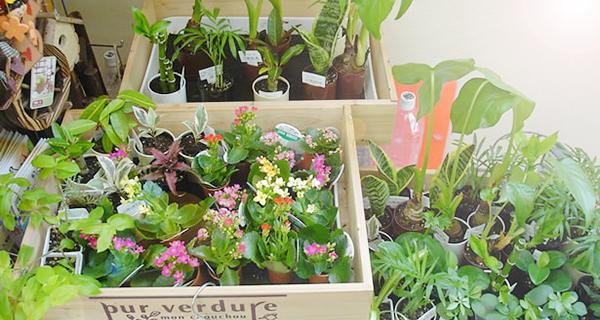 育てやすい野菜☆初めてさんベランダ栽培のポイント