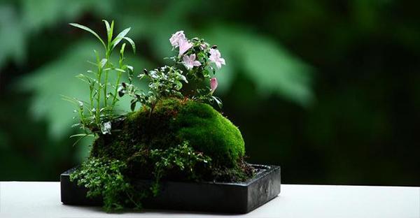 盆栽の育て方の基本☆初心者から覚える7つのステップ