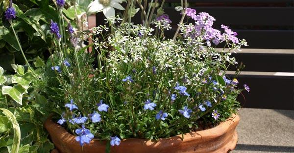 夏に咲く花の育て方☆春から準備したい人気の花々